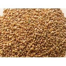 Семена люцерны для проращивания, 0,5 кг