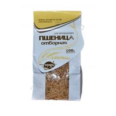 Пшеница отборная для проращивания, Алтай, 500 г